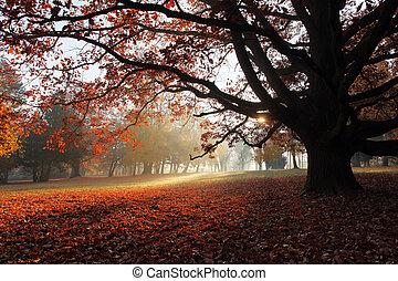 solo, autunno, albero, parco