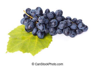 solo, azul, uva, grupo, en, hoja