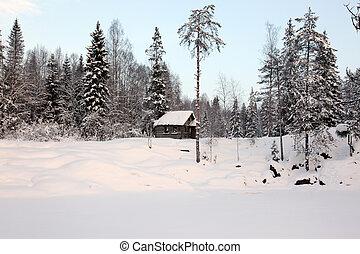 solo, casa, inverno, foresta