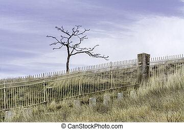 solo, cementerio, estéril, y, calma