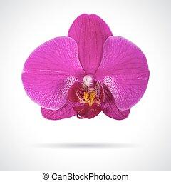 solo, flor, orquídea