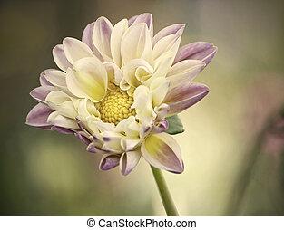 solo, flower., uno