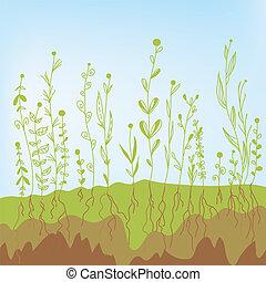 solo, -, ilustração, crescimento, agrícola, capim, raizes