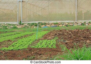 solo, para, plantar