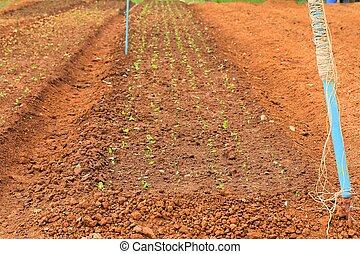 solo, plantar
