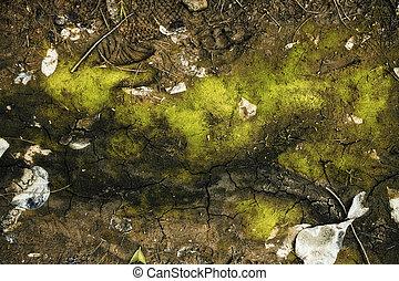 solo, rachas, verde, musgo, textura