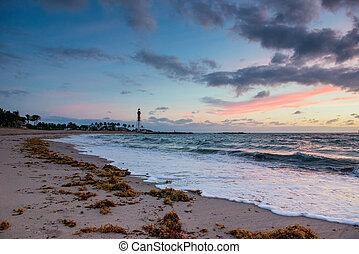 solopgang, hen, atlantiskt ocean, ind, florida.