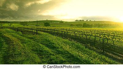 solopgang, hen, den, vingård