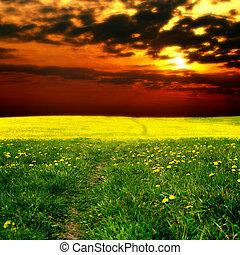 solopgang, på, mælkebøtte, felt