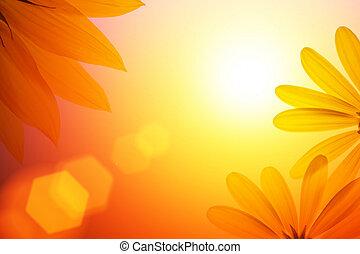 solsken, bakgrund, med, solros, details.