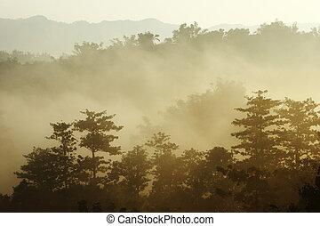 solsken, dimma, morgon