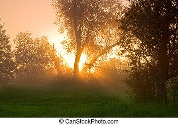 solstrålar, in, den, fjäder, veder