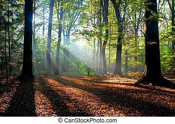 solstrålar, strömma, in i, en, höst skog