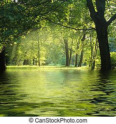 solstråle, in, grönt skog, med, vatten