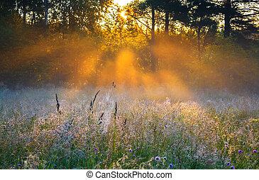 soluppgång, över, a, sommar, blomstrande, äng