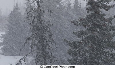 Somber Forest Snow Storm Blizzard - Heavy, wet snow falls as...