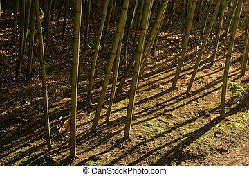 sombras, bambu, dramático, (2), floresta
