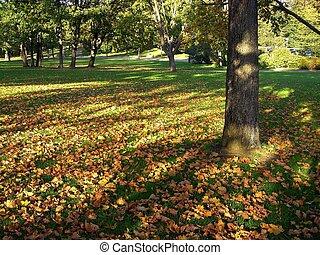 sombras, en el parque