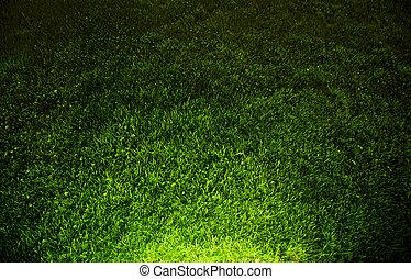 sombre, contrasté, herbe verte, fond