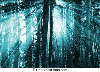 sombre, coucher soleil, forêt
