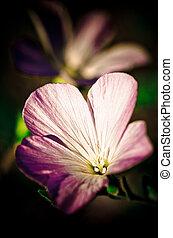 sombre, fleur, romantique, fond