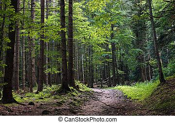 sombre, forêt