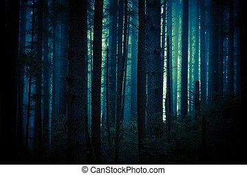 sombre, forêt, terrifiant