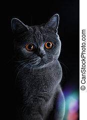 sombre, museau, yeux, chat jaune