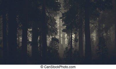 sombre, noir, pin, coffre, forêt, arbre