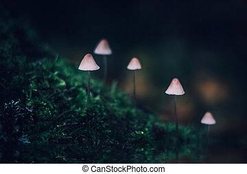 sombre, peu, groupe, champignon, forêt, toxique, mycena, magie, galopus, mushrooms., champignons, arrière-plan., incandescent, colline verte, filopes, couvert, blanc, moss.