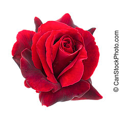 sombre, rose, blanc rouge, fond