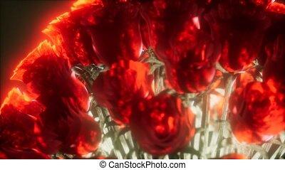 sombre, roses, lumière