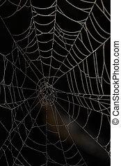sombre, toile, araignés