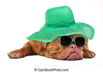 sombrero extraño, perro, anteojos