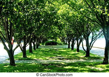 sombrio, árvores, ligado, um, quentes, dia ensolarado