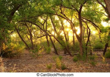 sombrio, dourado, floresta