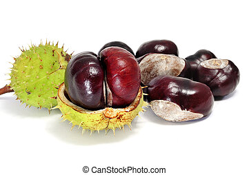 chestnuts - some chestnuts with peel isolated on a white...