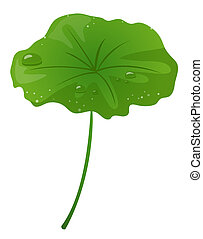Some clear beads on the green lotus leaf