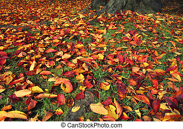 some colorful leaves in autumn