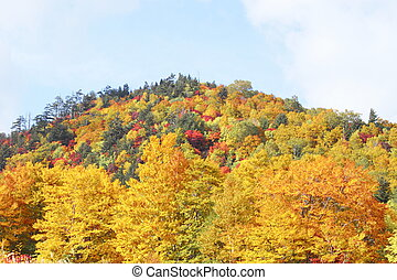 some colorful leaves in Hachimantai