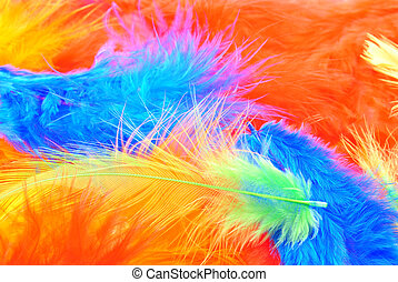 some coloured feathers ideal for easter decoration
