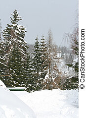 Some conifers under the snow in mountains