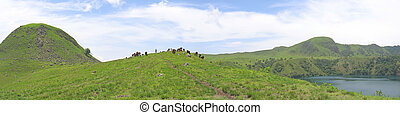 Some cows and buffalo on grass hills - Cameroon - Africa - Panorama.