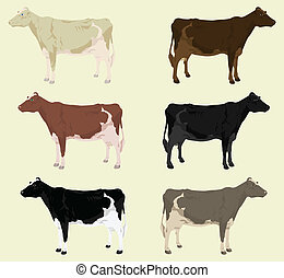 Some cows on a farm of different colouring. A vector illustration