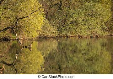 Some ducks on lake