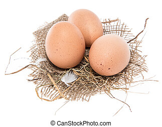 Some Eggs isolated on white