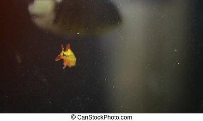 some fish in an aquarium