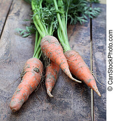 Some fresh carrots with leaves