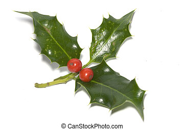 some leaves of holly on white background