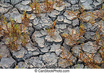 plants grows at dry soil